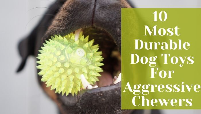 10 Most Durable Dog Toys For Aggressive Chewers