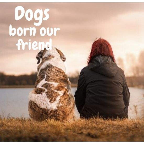 Dogs born our friend