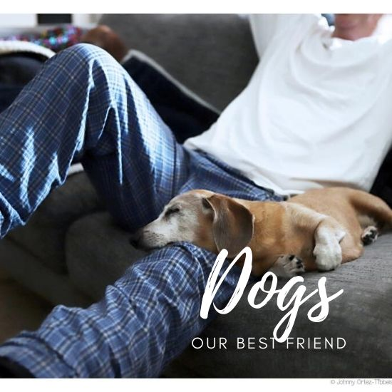 Dogs our best friend