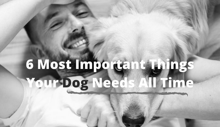 6 Most Important Things Your Dog Needs All Time
