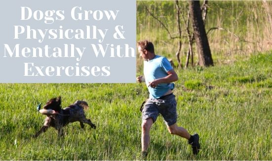 DogsGrow Physically & Mentally With Exercises