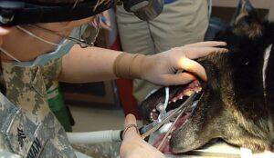 Plaque in Dog Teeth