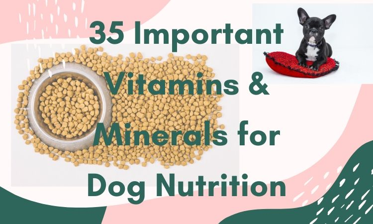 35 Important Vitamins & Minerals for Dog Nutrition