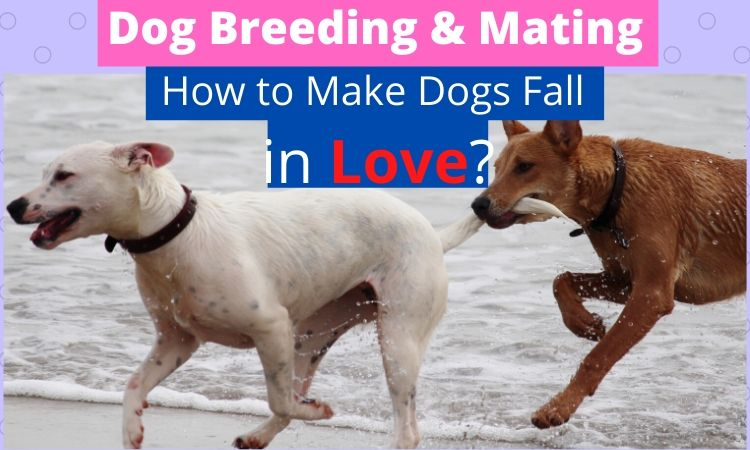 Dog Breeding & Mating_ How to Make Dogs Fall in Love_