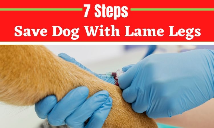 How These 7 Steps Save Dog With Lame Legs_
