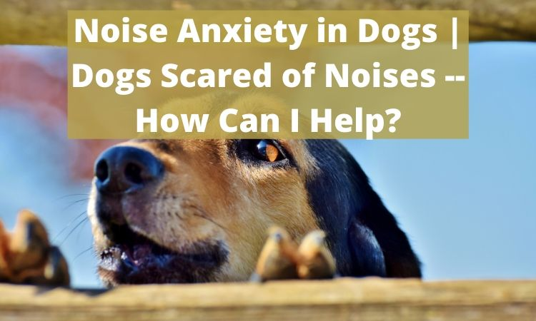 Noise Anxiety in Dogs _ Dogs Scared of Noises -- How Can I Help_