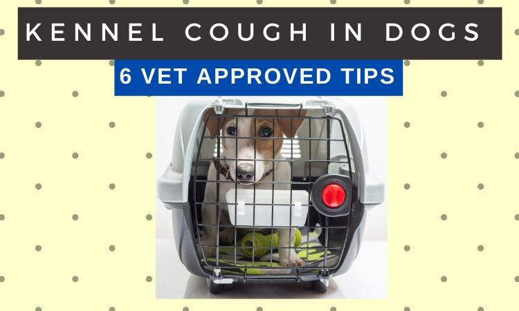 Preventing Kennel Cough in Dogs _ 6 Vet Approved Tips