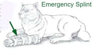 Emergency splint