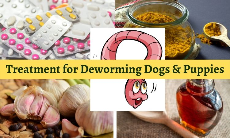 Treatment for Deworming Dogs & Puppies