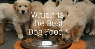 Which is the best dog food