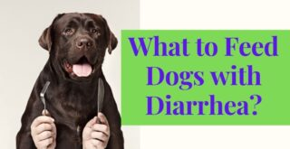 What to Feed Dogs with Diarrhea_