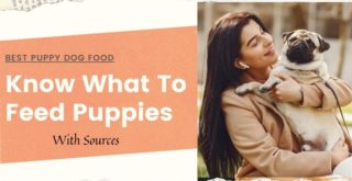 Know what to feed puppies