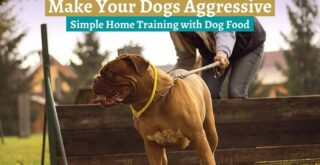 Make Your Dogs Aggressive_ Simple Home Training with Dog Food